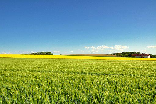 Field, Agriculture, Farm, Landscape, Panorama, Nature