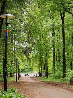 In The Spring Forest, Fresh Green, Plant, Parkweg