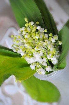 Flower, Nature, Sheet, Plant, Krupnyj Plan, Petal
