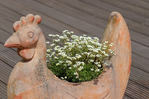 Nature, Roof Garden, Hahn, May, Roof Terrace, Plant