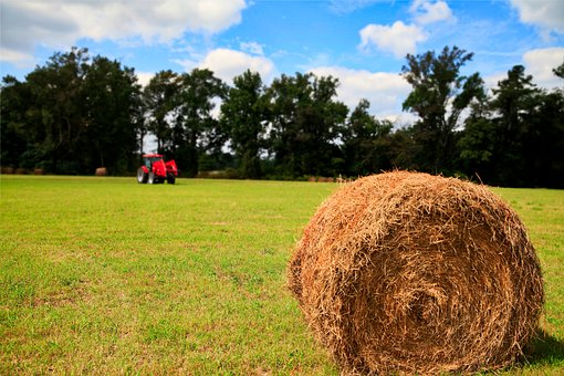 Grass, S, Scenery, Nature, Summer, Hay, Straw, Ranch