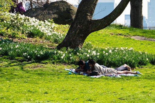 Garden, Relaxation, Couple, Rest, Reading, Grass