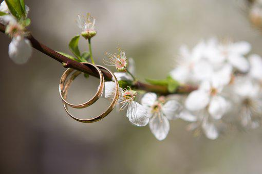 Wedding, Rings, Spring, The Branch Of A Tree, Bloom