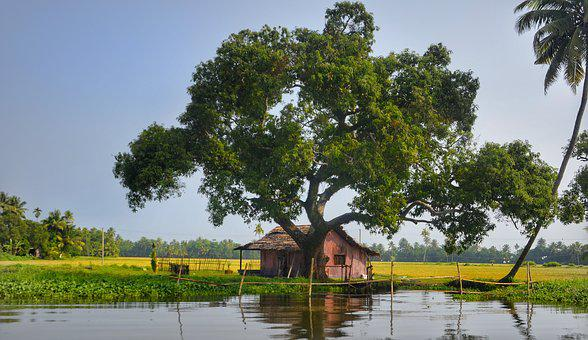 Tree, Shade, Riverside House, Backwater, India, Nature