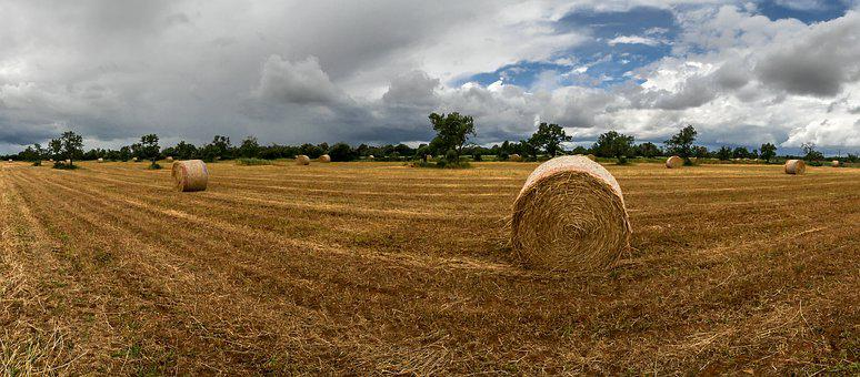 Rural Area, Field, Nature, Landscape, Spain