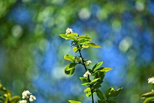 Twig, Shrub, Flower, Bloom, Spring Leaves, Bokeh