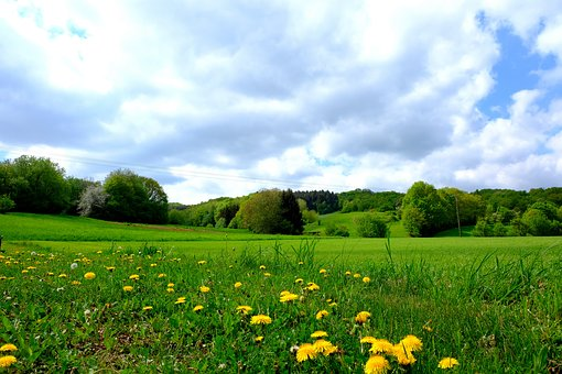 Landscape, Grass, Field, Meadow, Nature, Summer, Flower