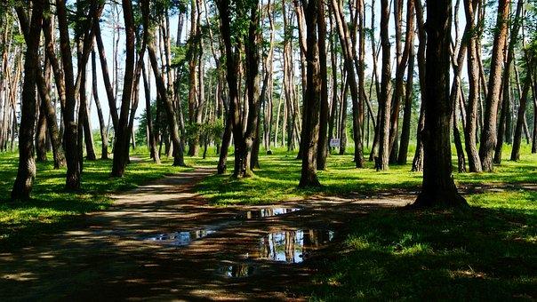 Nature, Wood, The Rain Came Back, Pine, Gangneung