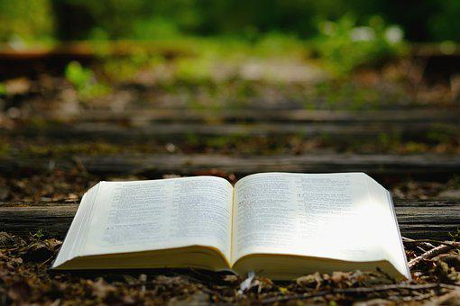 Bible, God's Words, Nature, Wood, Seemed, Travel, Old