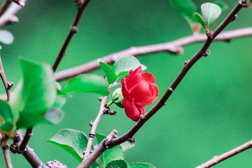 Plant, Tree, Nature, Branch, Flower, Outdoor, Garden