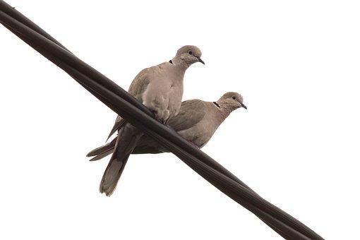Bird, Wildlife, Nature, Pigeon, Feather, Animal