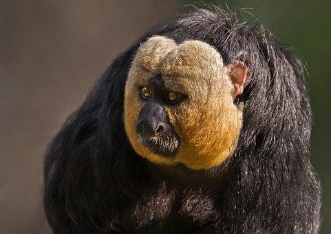Mammal, Fauna, Portrait, Primate, Animal, Zoo