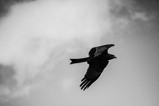 Bird, Black And White Photography, Sky, Nature