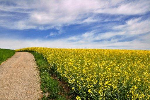 Nature, Landscape, Spring, Blossom, Bloom