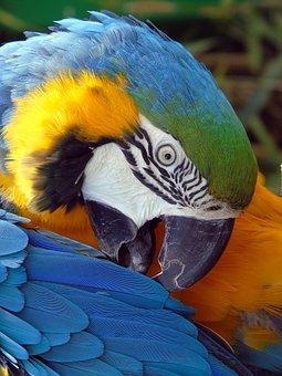 Parrot, Bird, Feather, Macaw, Wing, Tropical, Beak