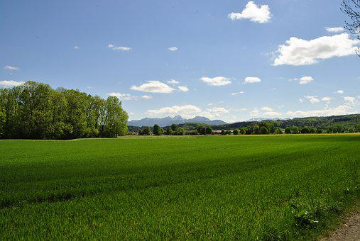 Landscape, Field, Grass, Nature, Agriculture, Panorama