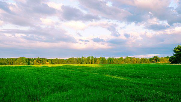 Panoramic, Lawn, Field, Nature, Rural Area, Sky