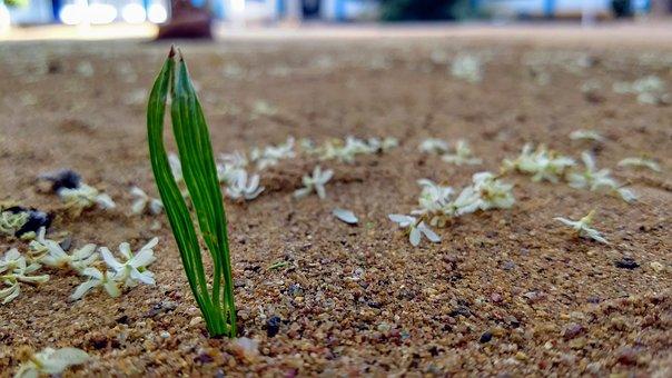 Nature, Soil, Outdoors, Summer, Flora