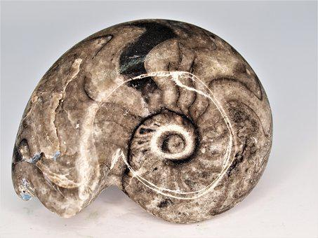 Nature, Desktop, Ammonite, Gem, Fossil