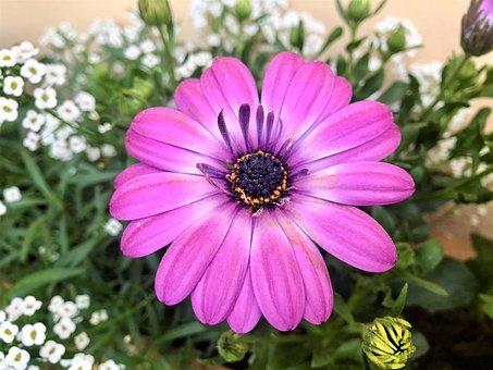 Spring, Flower, Nature, Garden, Purple