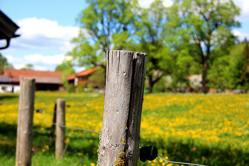 Nature, Tree, Wood, Grass, Landscape, Fence