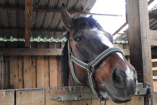 Barn, Farm, Mammals, The Horse, Horse Head, Harness
