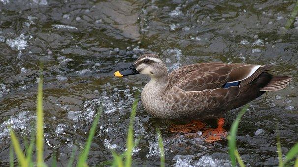 Nature, New, The Body Of Water, Lake, Wildlife, Duck