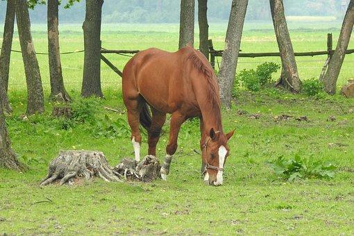 Lawn, Mammals, Farm, Animals, Farm Animals