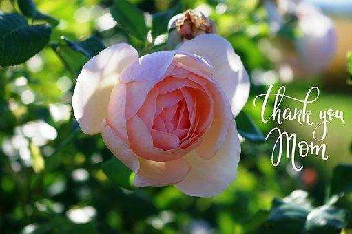 Mother's Day, Rose, Mother, Flower, Plant, Nature, Leaf