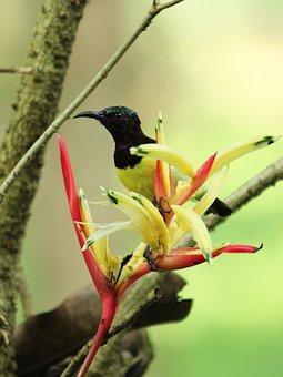 Bird, Nature, Wildlife, Outdoors, Animal, Wing, Wild