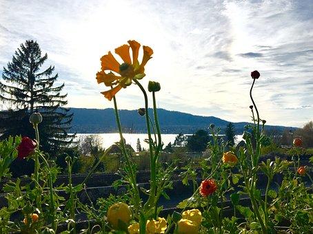 Flower, Nature, Summer, Plant, Sky, Organic, Bio