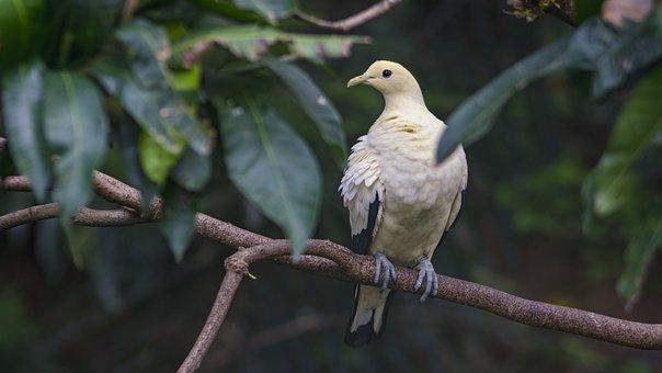Bird, Nature, Wildlife, Animal, Outdoor, Wings, Wild