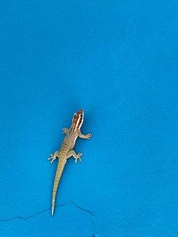 Outdoors, Reptile, Travel, Nature, Lizard, Tropical
