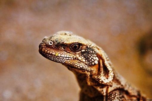 Nature, Reptile, Animal World, Lizard, Animal, Small