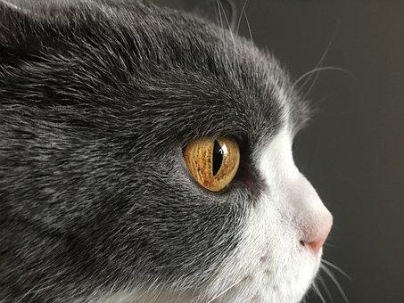 Animal, Cute, Portrait, Search