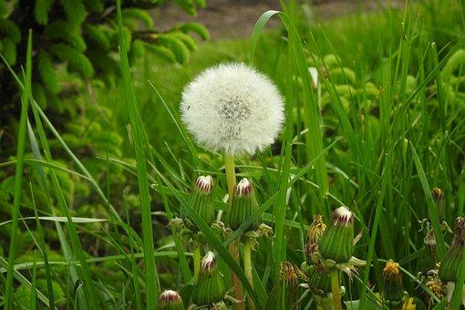 Lawn, Plant, Nature, Field, Season, Rural District