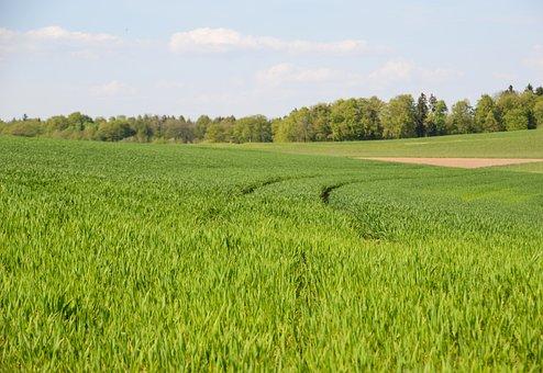 Grass, Field, Traces, Agriculture, Landscape, Nature