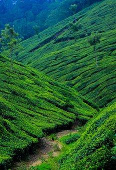 Nature, Landscape, Travel, Outdoors, Green, Kerala