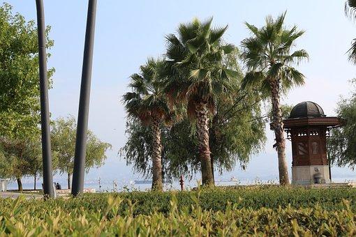 Tree, Arecaceae, No One, Sky, Travel, Outdoor, Plant