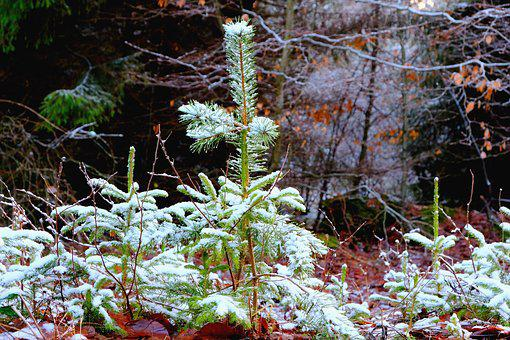Nature, Tree, Wood, Season, Plant, Winter, Environment