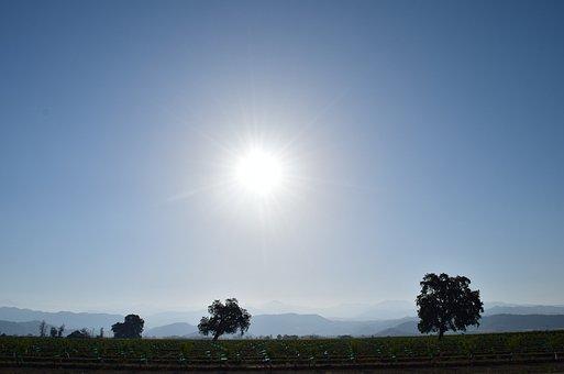 Sky, Field, Trees, Sun, Landscape, Blue, Spring, Green