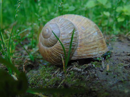 Nature, Animal, Snail, Voltaic Exoskeleton Imbedded