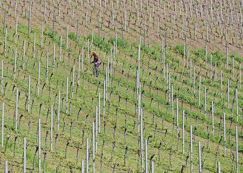 Work In The Vineyard, Weeding, Motor Mower