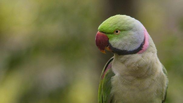 Nature, Bird, Animal, Wildlife, Beak, Wings, Wild