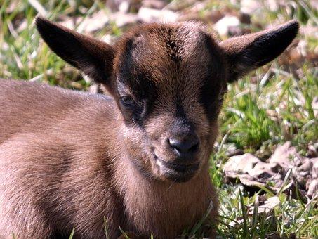 Mammal, Animal, Cute, Nature, Grass, Animal World