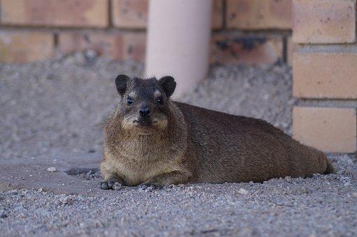 Mammal, Animal World, Nature, Animal, Cute, Fur, Small