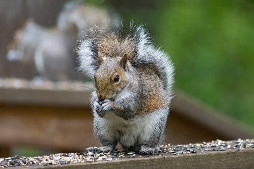 Wildlife, Nature, Animal, Mammal, Cute, Squirrel