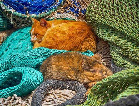 Animalia, Nature, Color, Domestic, Pet, Cat, Cats