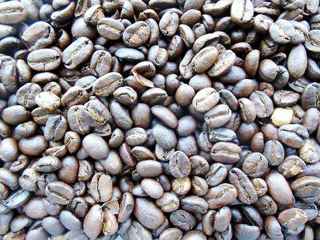 Background, Kopi Luwak, Luwak, Food, Seed, Crop, Coffee
