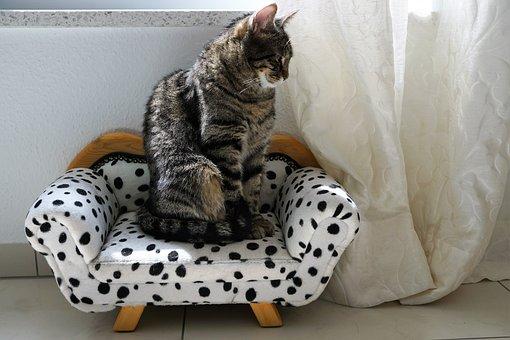 Sit, Sofa, Family, Animal, Cute, Pillow, Domestic